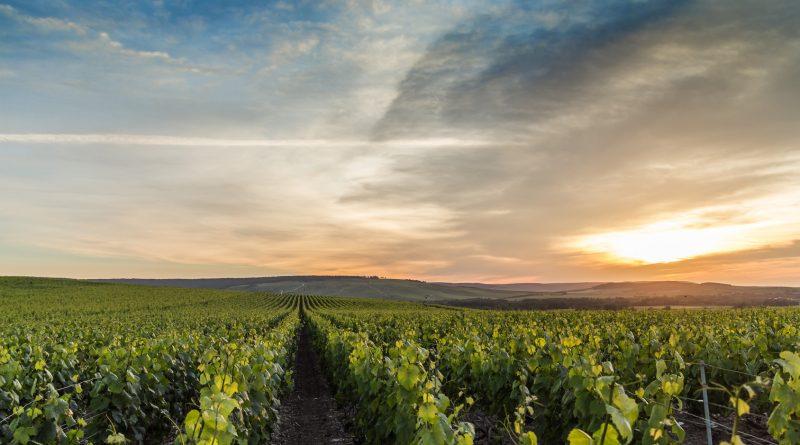 Quattro champagne da scoprire di piccoli produttori RM delle MONTAGNE DE REIMS