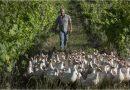 Di Filippo: i vini biodinamici del vinaiolo che sussurra ai cavalli