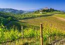 Umani Ronchi – Un simbolo dell'eccellenza dei vini delle Marche e dell'Abruzzo