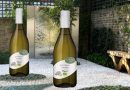 Il Pinot Grigio Biologico di Piera 1899: il vino che ha stregato gli svedesi